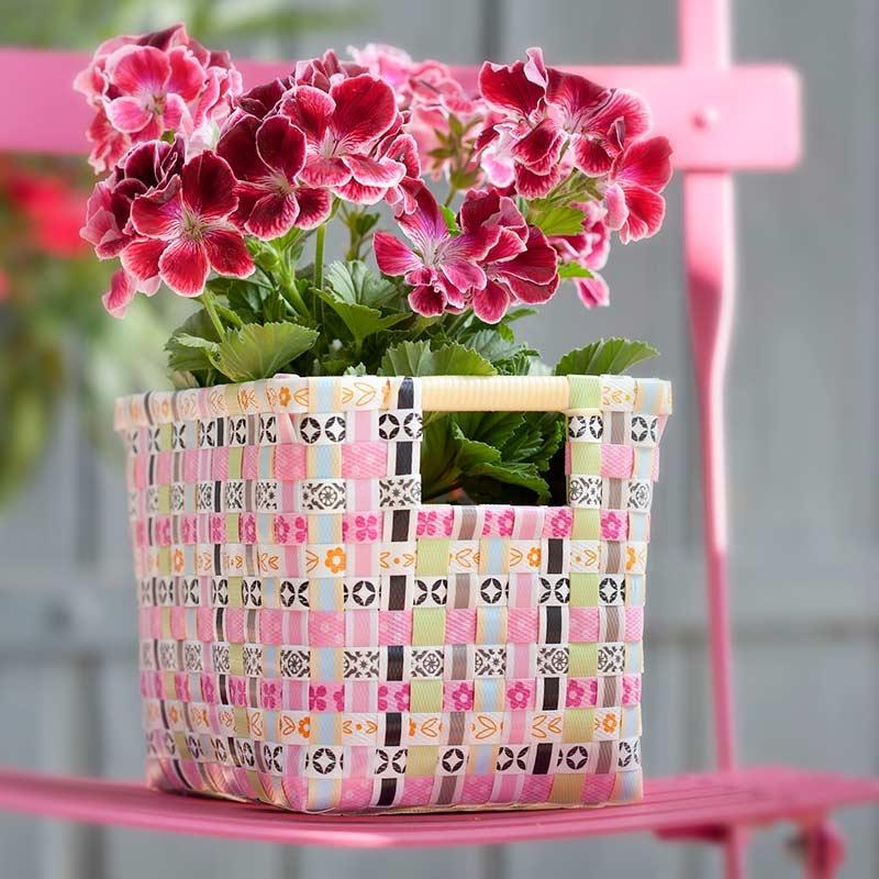 Te presento mis flores