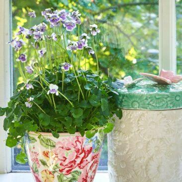 ¿Cuál es tu planta aromática preferida?